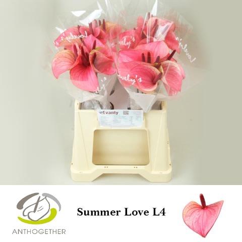 <h4>ANTH A SUMMER LOVE 40 L4.</h4>