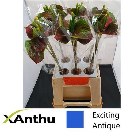 ANTH A EXCITING LOVE
