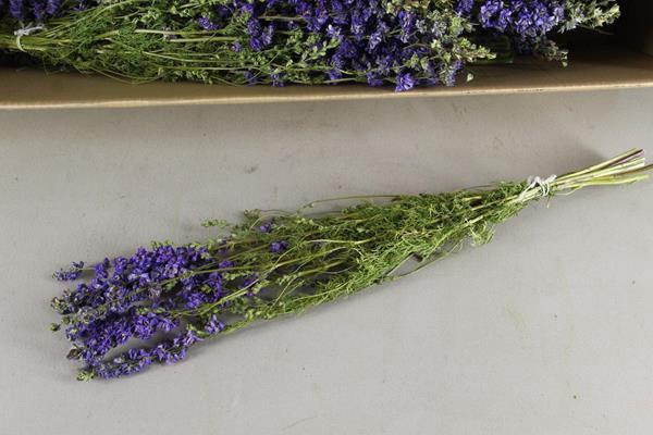 <h4>Df Delphinium Lavender Bs 40gr</h4>