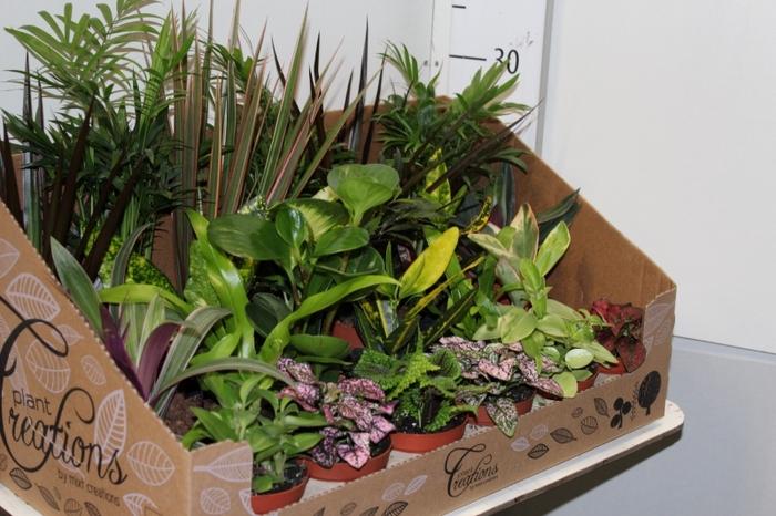 <h4>Kamerplanten gemengd groen 24 srtn</h4>