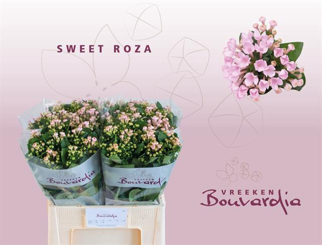 <h4>Bouvardia Sweet Roza</h4>