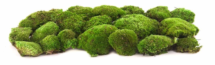 Pole moss green stabi