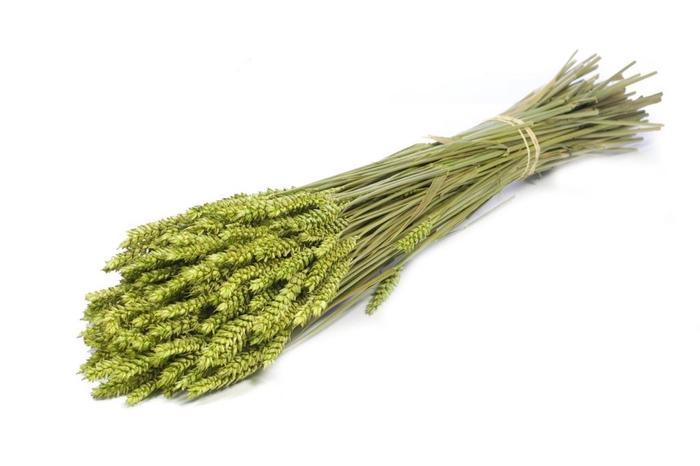 <h4>Tarwe (triticum) green</h4>