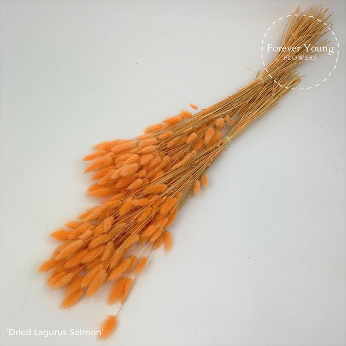 <h4>Dried Lagurus Salmon x30</h4>