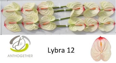 <h4>ANTH A LYBRA</h4>
