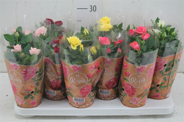 <h4>Rosa Favourite Gemengd</h4>
