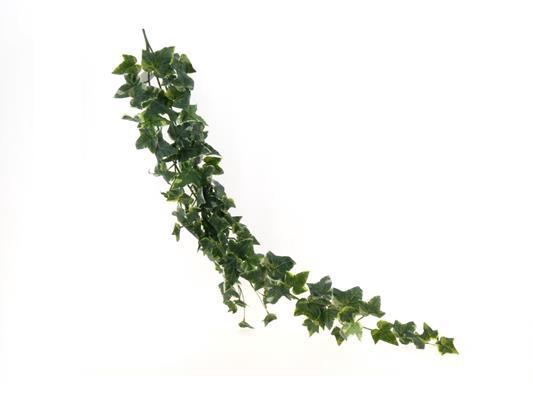 <h4>Af Ivy Vine 46 Holland X 3 W/8</h4>