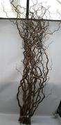 <h4>Corylus Contorta</h4>