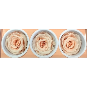 Rose Monalisa Almond Cream