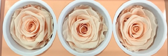 Rose Monalisa Almond Cream