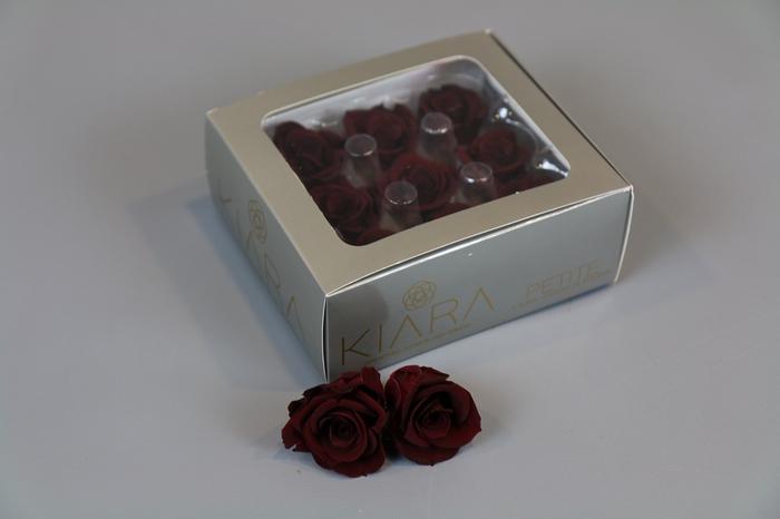 <h4>Rosa Preserved Burgundy Petite</h4>