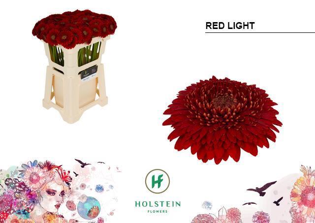 <h4>GE MB POM RED LIGHT</h4>