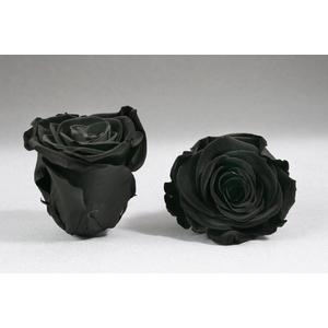 Rose stab. XXL Bla-01