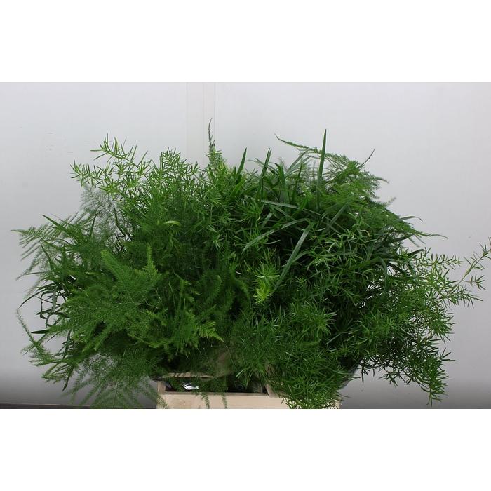 <h4>Asparagus Gem In Bos</h4>