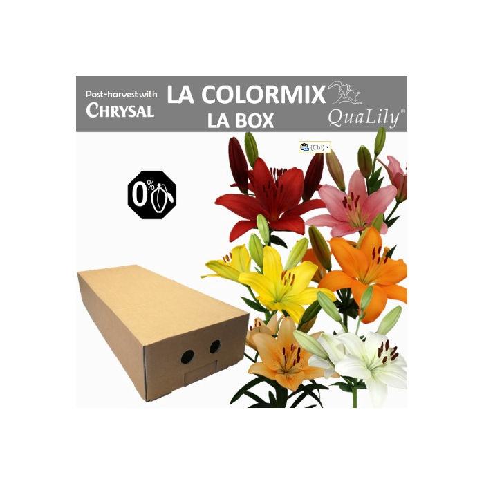 <h4>Li La Gem In Fust La Box 4+ Mix</h4>