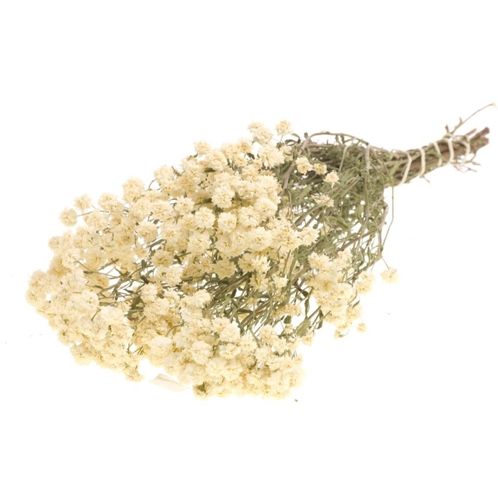 <h4>DRIED FLOWERS - ACHILLEA PTARMICA NATURAL WHITE</h4>
