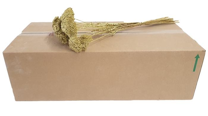 <h4>Achillea per stem Gold</h4>