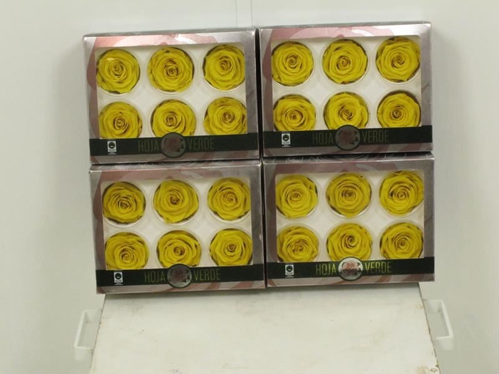 <h4>Preserved Roses Yellow</h4>