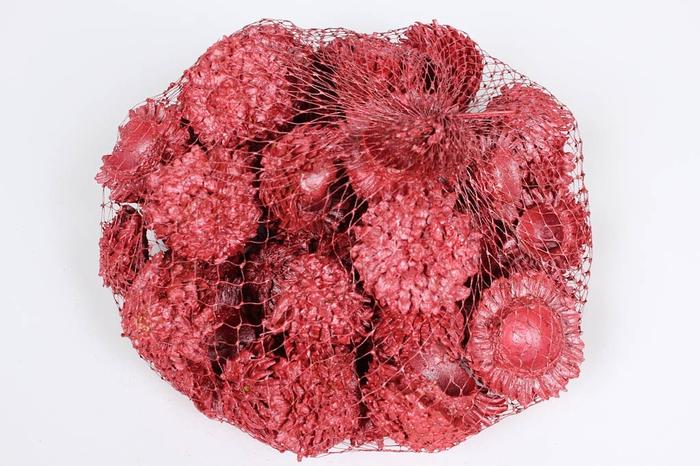 <h4>Acorn cones 500gr in net Red</h4>