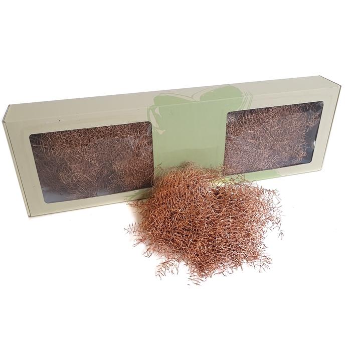 <h4>Coralfern preserved 10st per bunch Copper</h4>