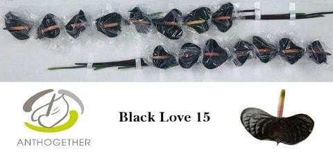 <h4>ANTH BLACK LOVE 15.</h4>