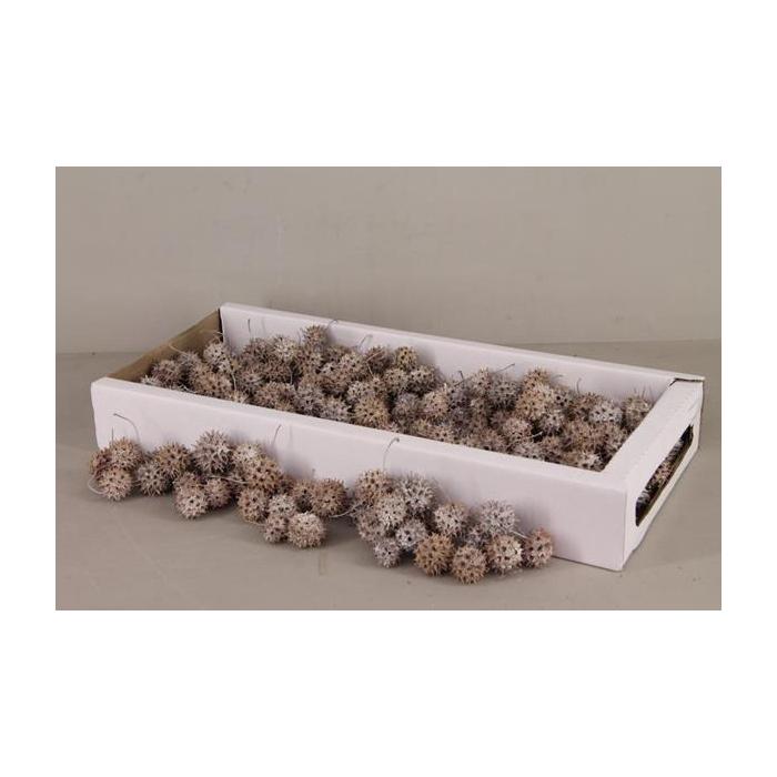 <h4>Amberbaum Box (1 Kg) White</h4>