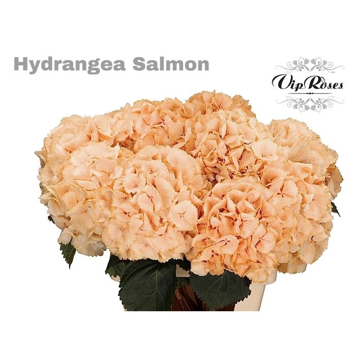 <h4>HYDR M SALMON L 60 cm</h4>