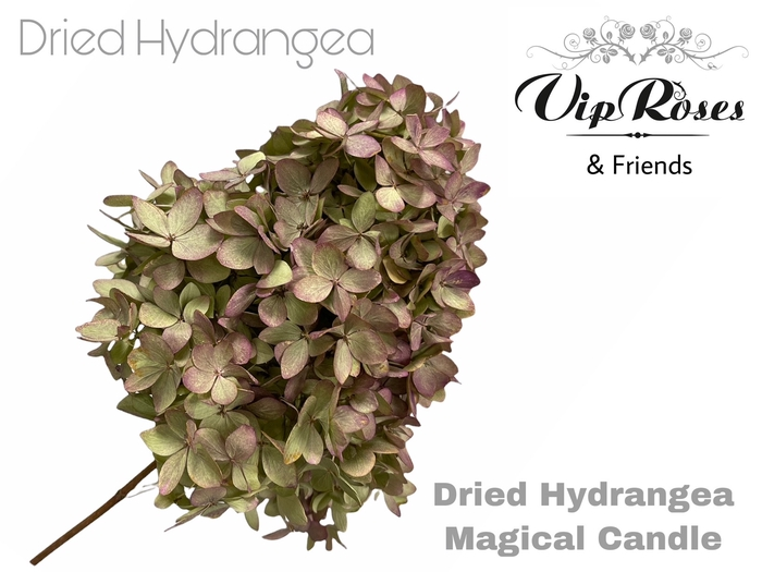 <h4>DRIED HYDRANGEA MAGICAL CANDLE</h4>