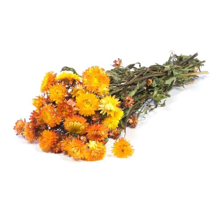 <h4>DRIED FLOWERS - HELICHRYSUM NATURAL ORANGE</h4>