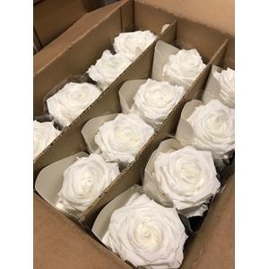 Rose on stem xl bulk 55cm white