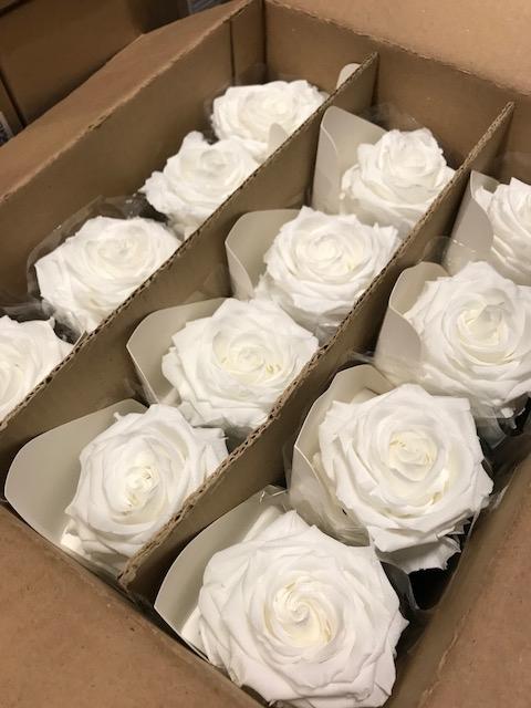 <h4>Rose on stem xl bulk 55cm white</h4>
