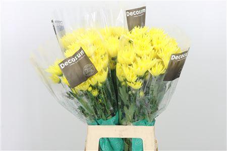 <h4>Chr T Delianne Yellow</h4>