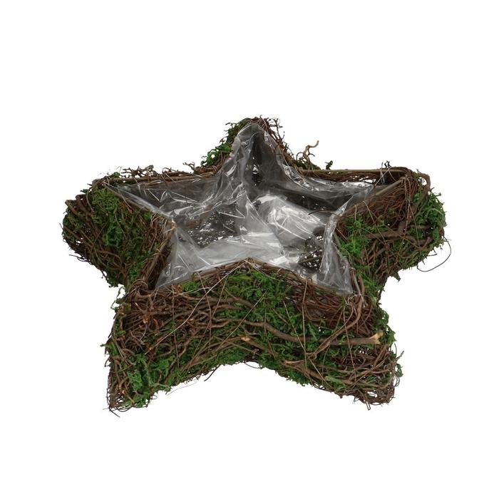 <h4>All Saints Salim planter star+moss 30cm</h4>