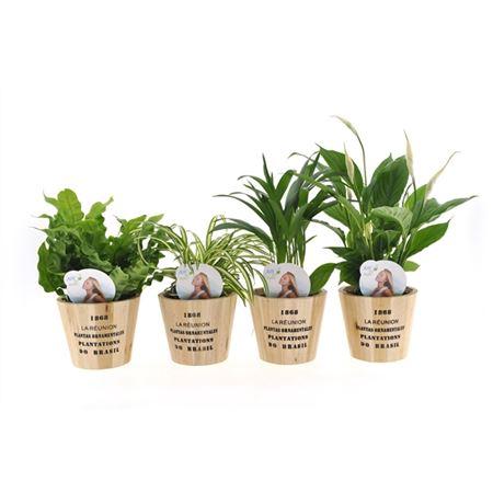 <h4>Ov Kamerplanten Gemengd Hout Nairobi</h4>