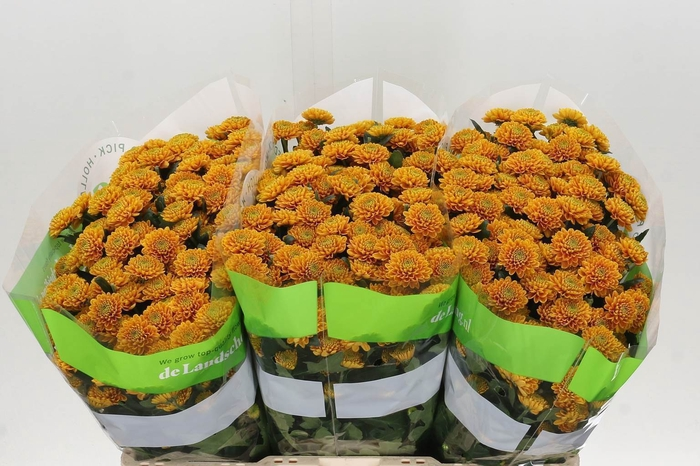 <h4>Chrysant santini Ellison Orange</h4>