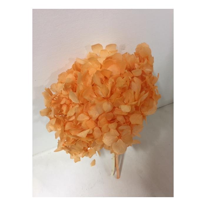 <h4>Hydrangea orange past.stabi</h4>