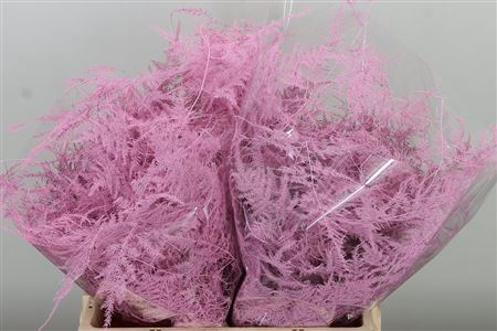 <h4>Asparagus Small Baby Pink</h4>