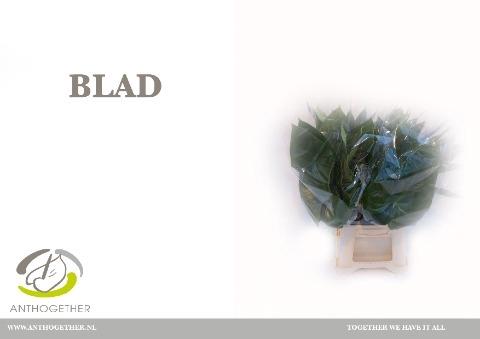 <h4>Anthurium   ...blad</h4>