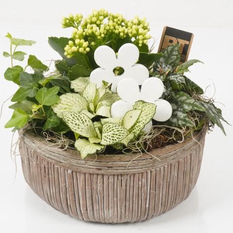 <h4>PTIB4622 Arrangementen planten in schaal</h4>