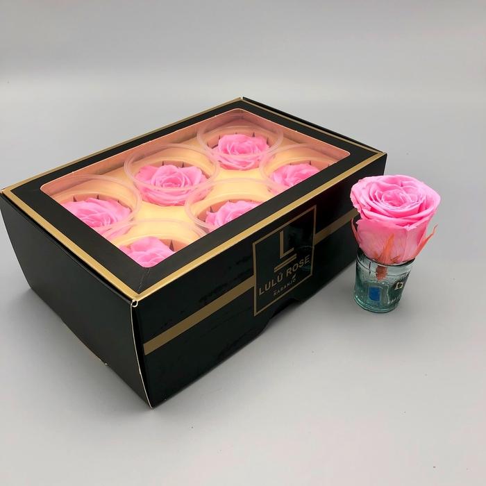 <h4>R PR Lulu (Large) Baby Pink</h4>