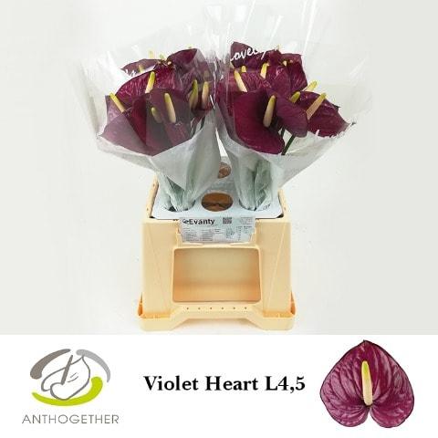 <h4>ANTH A VIOLET HEART 40 L4,5.</h4>