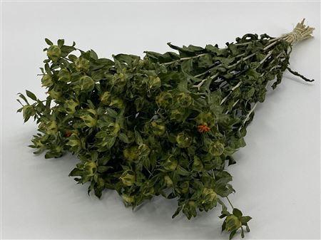 <h4>DRIED CARTHAMUS GREEN PB</h4>