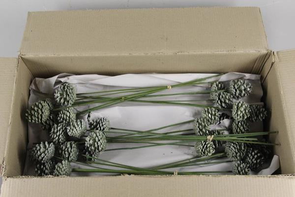 <h4>Stick Pine Cone  Wax Green</h4>