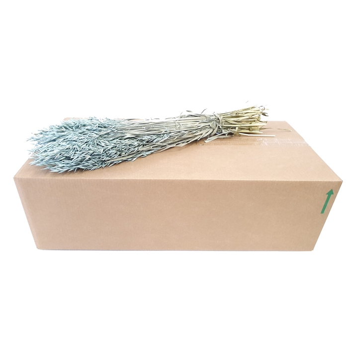 <h4>Avena per bunch Frosted Light Blue</h4>