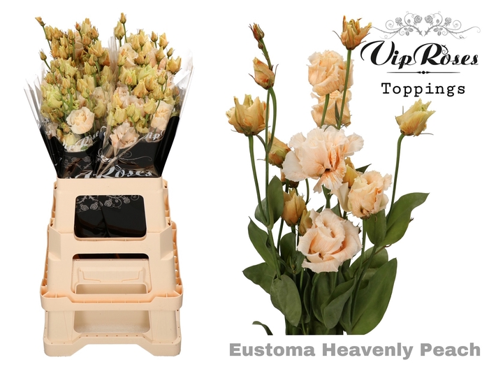 EUST G ALISSA HEAVENLY PEACH