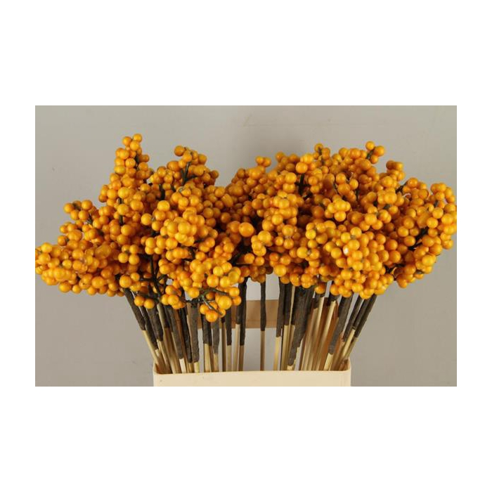 <h4>Stick Berries Ilex Yellow</h4>