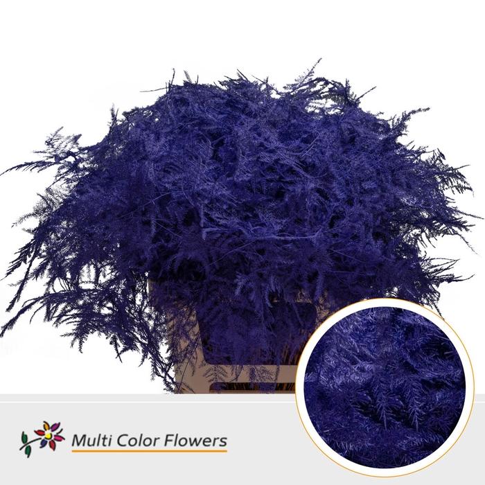 <h4>Asparagus extra veren gekleurd Violet donker</h4>