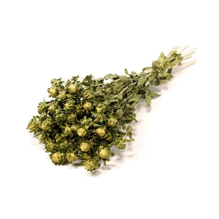 <h4>Bidens (Carthamus) Green naturel Craft</h4>