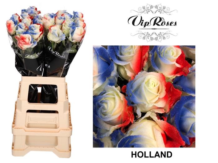 <h4>R GR FLAG HOLLAND</h4>