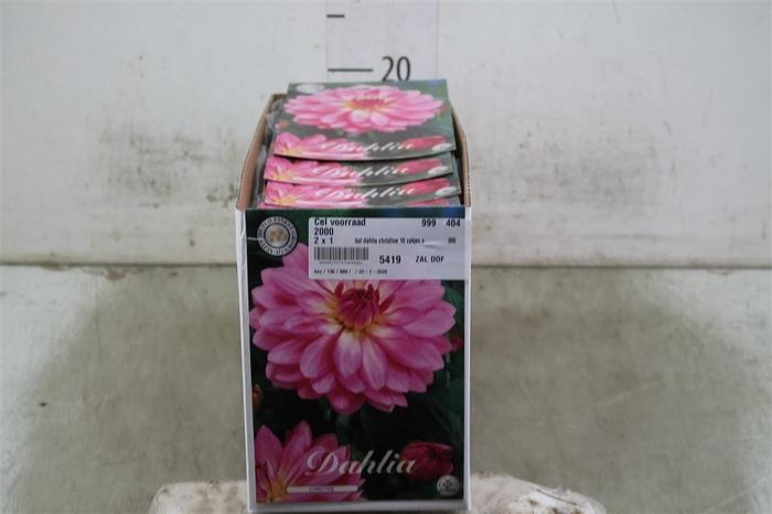 <h4>Bol Dahlia Christine 10 Zakjes X1</h4>